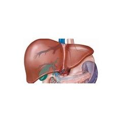 Afectiuni hepatice
